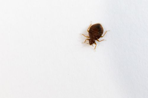 A Bed Bug on a wall